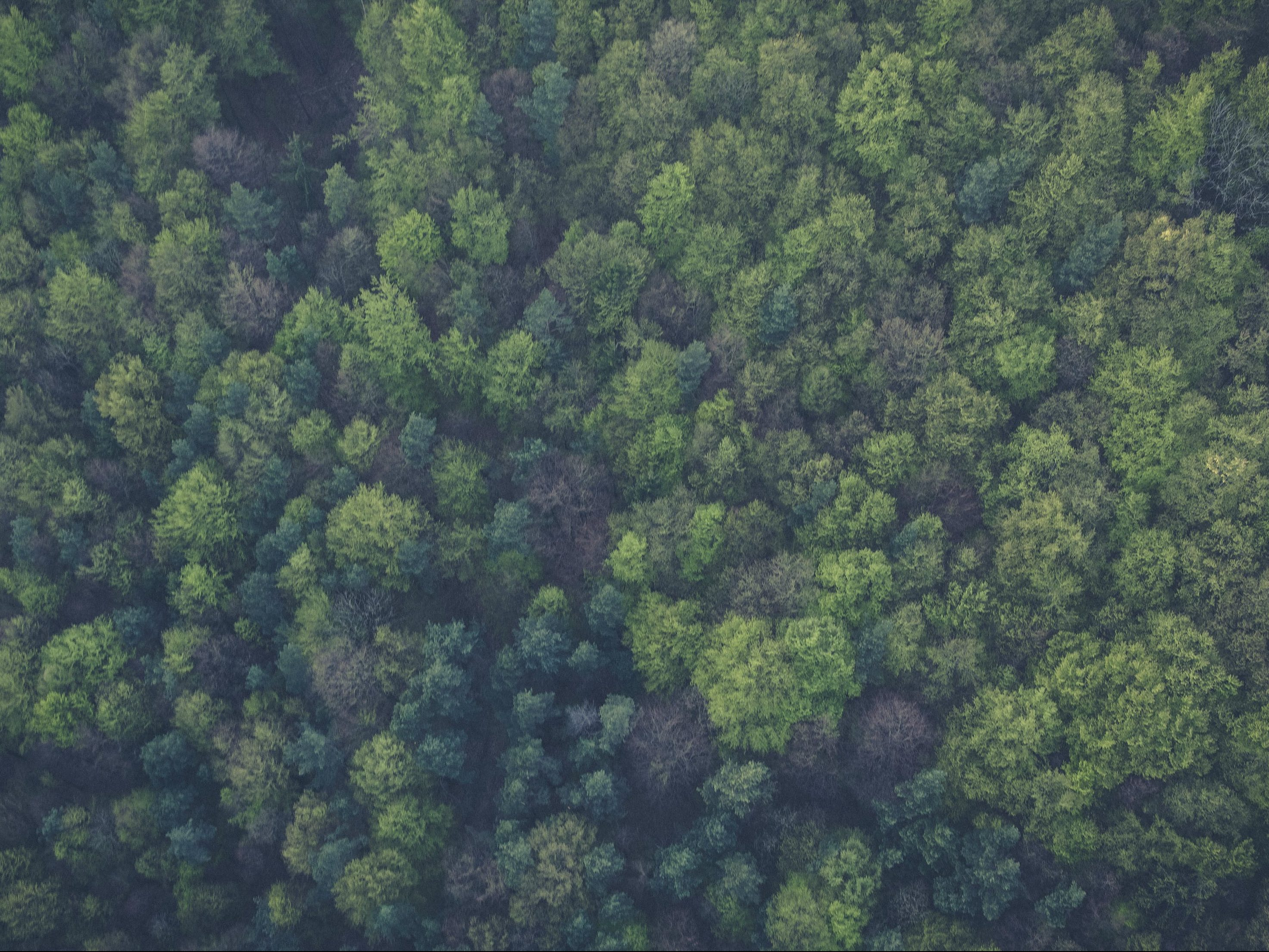 Forest from overhead